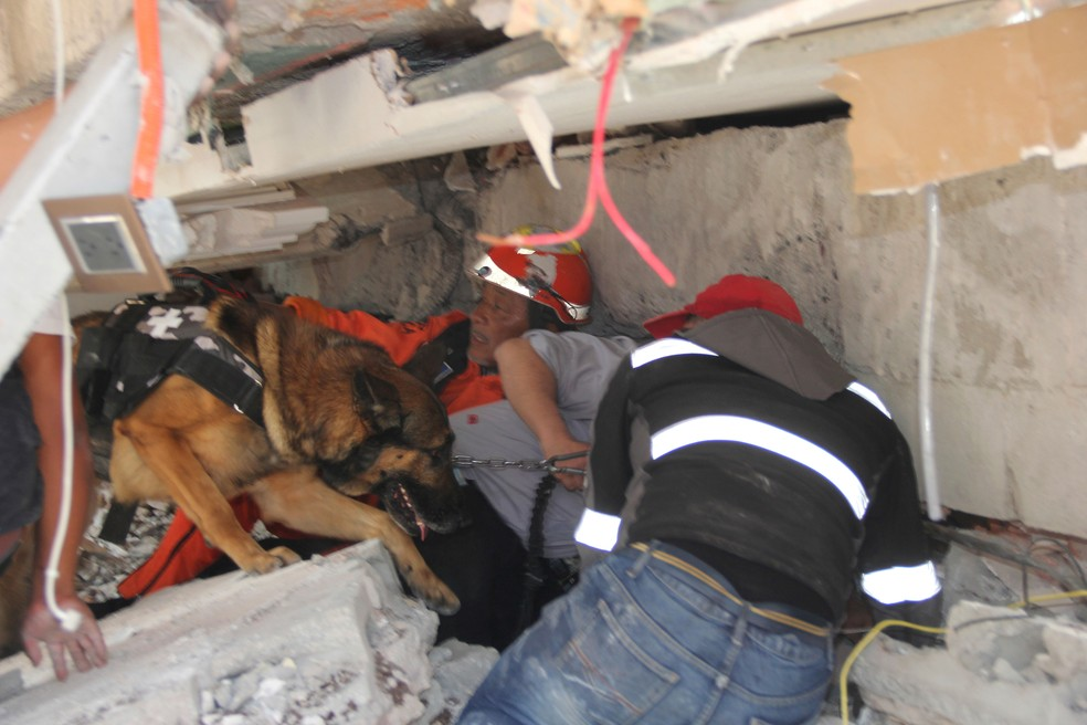 Cão trabalha nas operações de resgate de vítimas de terremoto em escola na Cidade de México (Foto: Carlos Cisneros/ AP)