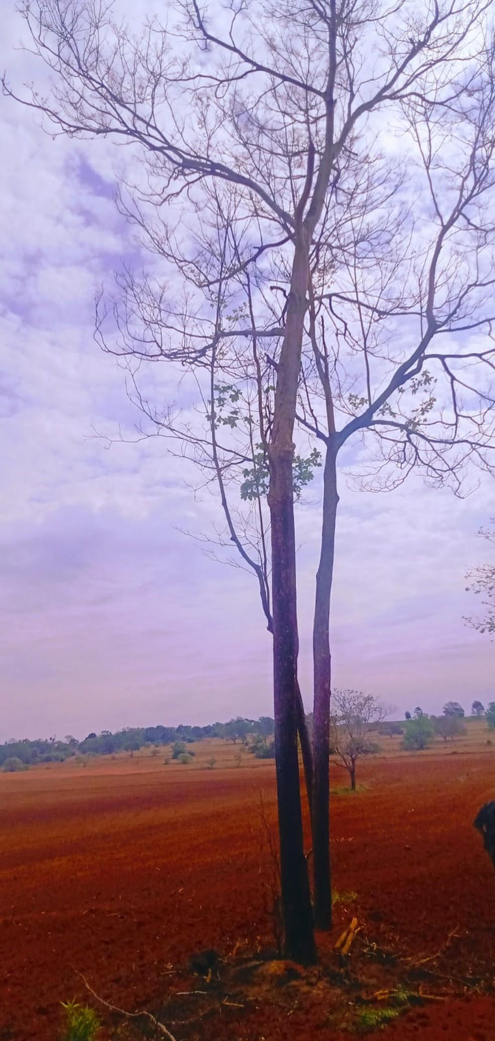 Árvore danificada pelo fogo rendeu advertência a sitiante — Foto: Polícia Militar Ambiental