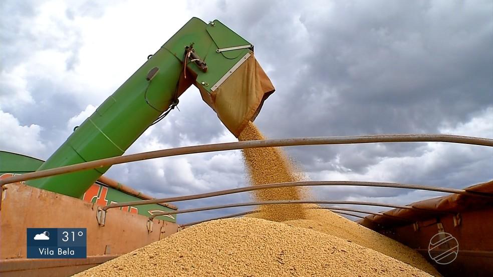 Soja é uma das bases para produção de biodiesel — Foto: Reprodução/TVCA