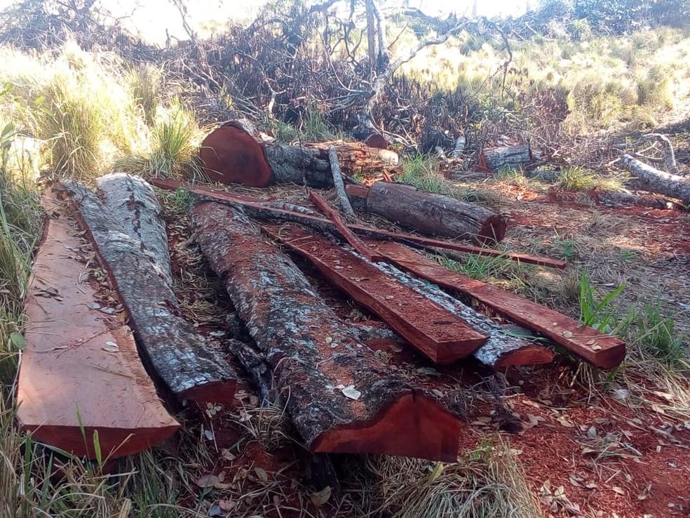 -  Proprietário de imóvel rural é autuado por realizar o corte de 29 árvores de espécies nativas em área de reserva legal  Foto: Polícia Militar de Meio