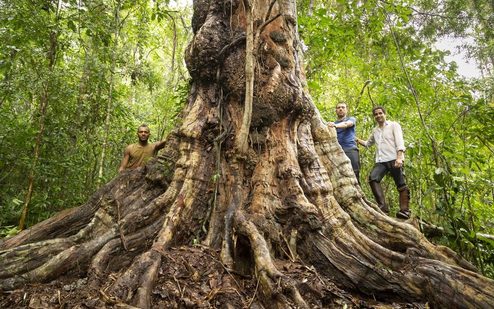 Expedição foi realizada em 22 de novembro — Foto: Cássio Vasconcellos/Arquivo pessoal