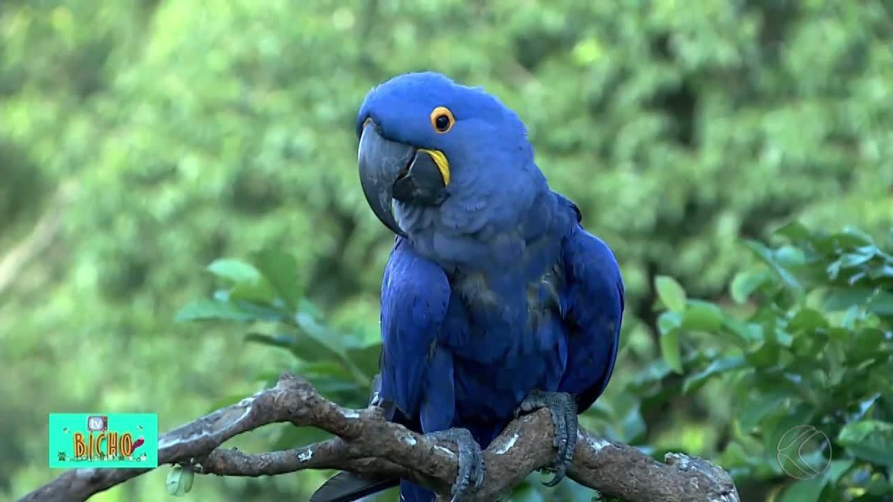 TV Bicho: conheça uma reserva ecológica que abriga animais de várias partes do mundo