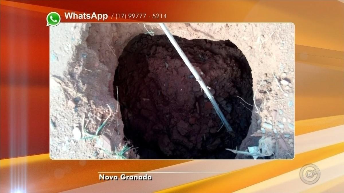 Pé de mamona é 'plantado' em buraco para alertar motoristas em Nova Granada