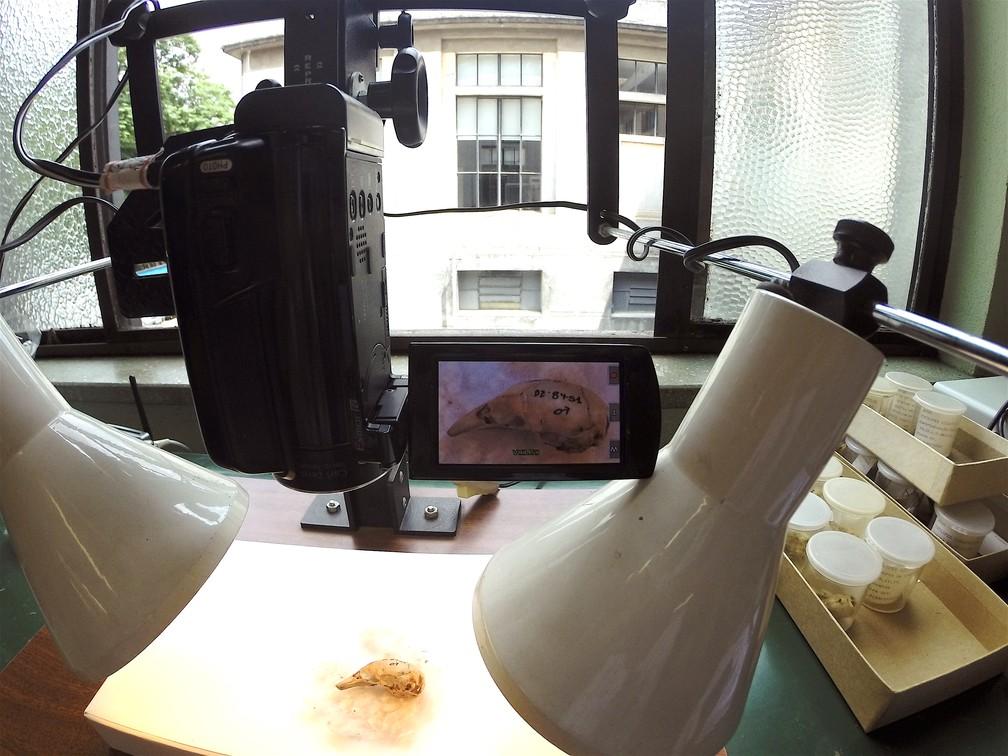 Pesquisadores analisaram coleções em laboratório (Foto: Flávia Miranda/Arquivo Pessoal)