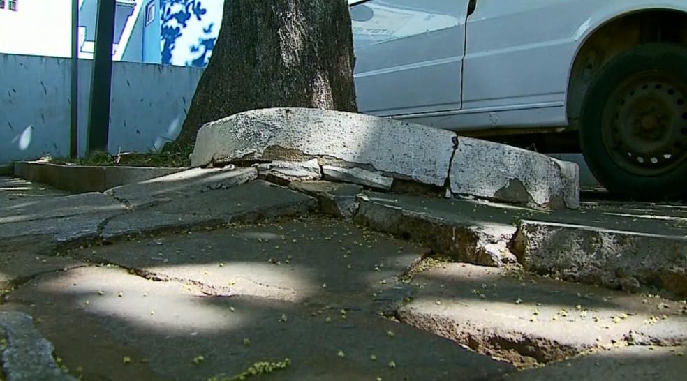 Santa Casa encaminhou pedido para corte de árvores em São Sebastião do Paraíso (Foto: Reprodução EPTV)