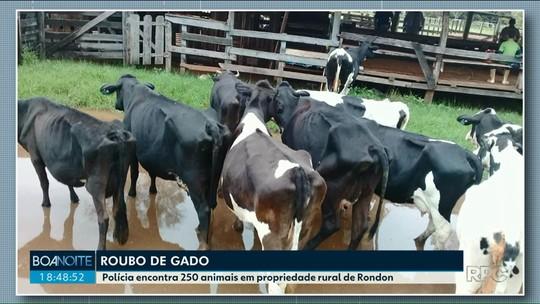 Polícia encontra 250 cabeças de gado com suspeita de furto, em propriedade rural de Rondon