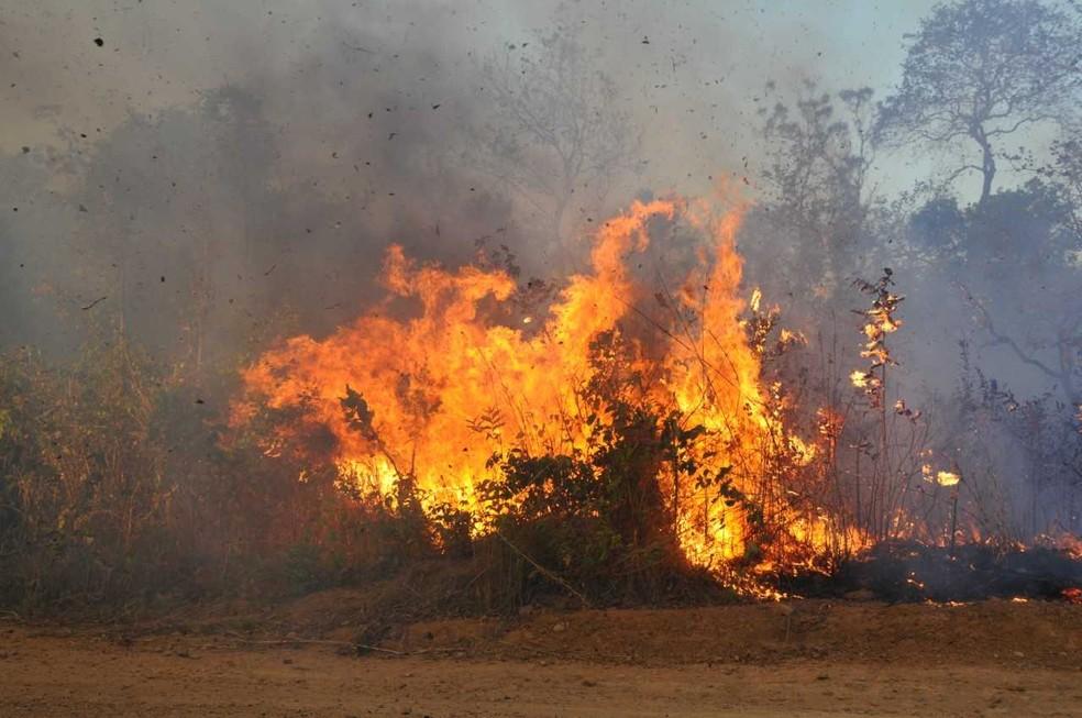Tocantins é um dos estados que lideram o número de focos de incêndio  (Foto: Divulgação)
