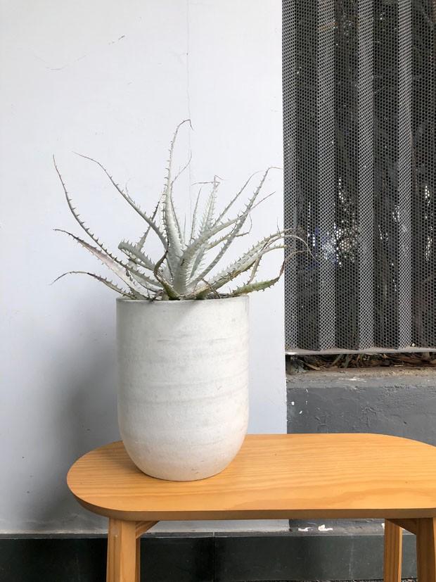 Plantas pequenas: 5 espécies lindas para quem tem pouco espaço (Foto: Reprodução/Divulgação)