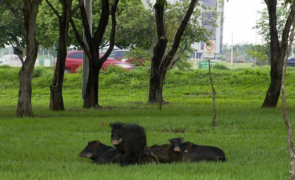Mais de 23 espécies de mamíferos foram flagradas circulando por ali — Foto: Terra da Gente