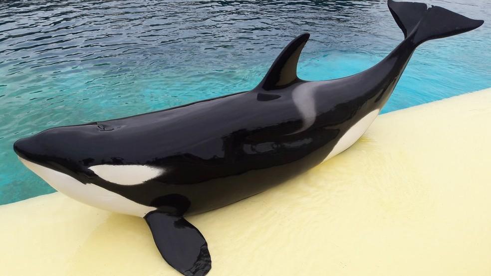Wikie vive em um parque marinho francês (Foto: Marineland via BBC)