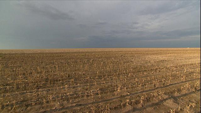 tv-seca-produtividade-soja-milho-Piaui (Foto: Reprodução)