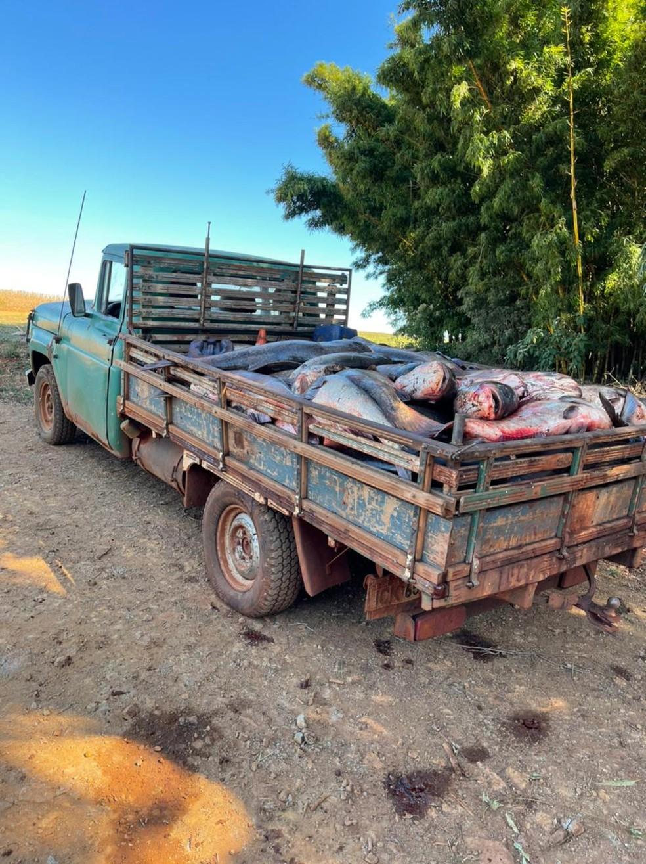 Peixes dentro de caminhão após serem retirados do açude de Oneide — Foto: Arquivo pessoal