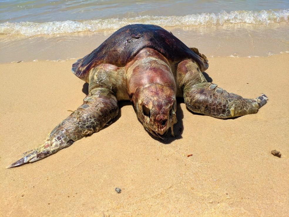 Tartaruga morta na Praia Bonita, na Barra de São Miguel  — Foto: Dennys Rafael/ Arquivo Pessoal
