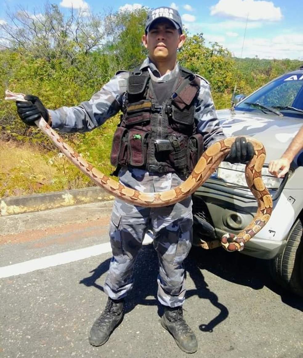 Jiboia foi contida por policiais militares — Foto: Divulgação/PM