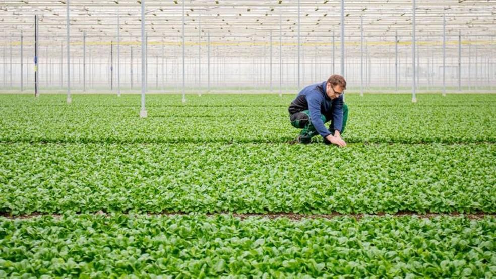 Estimular o crescimento de hortaliças em estufas pode se uma aplicação para o CO2 capturado do ar pela DAC — Foto: Alamy via BBC