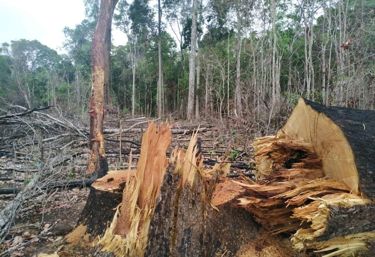 Imac deve reforçar medidas para conter queimadas e desmatamento, recomenda MP