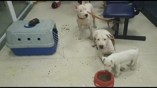Polícia do RJ resgata cães e pássaros após denúncias de maus tratos e tráfico de animais