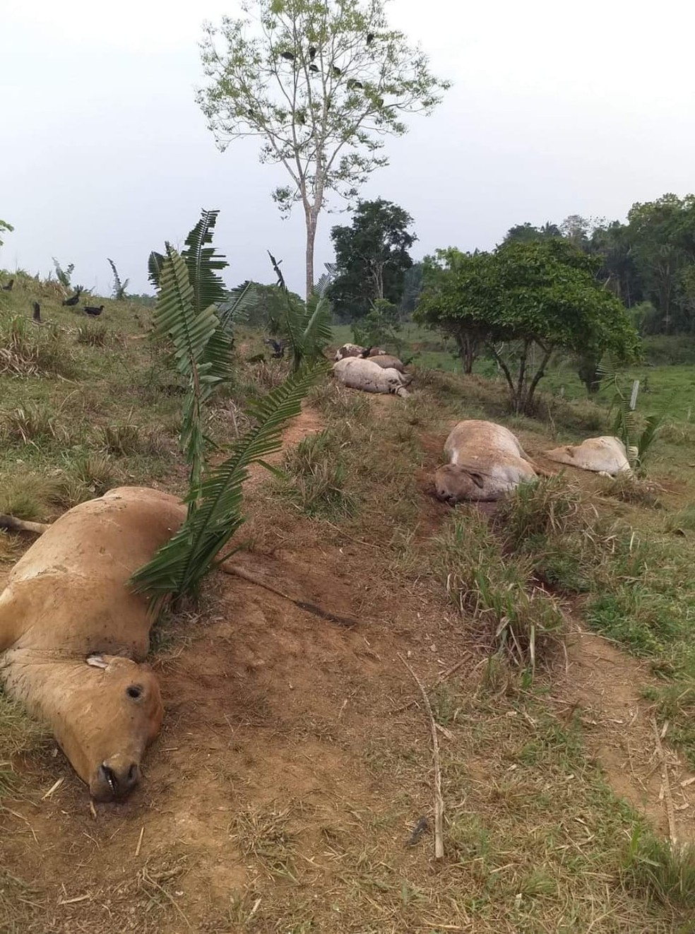 Produtor encontrou animais na pastagem — Foto: Odair José/Arquivo Pessoal