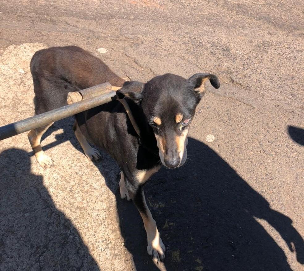 Cachorro resgatado por bombeiros em Itaí (SP) estava perdido desde quinta-feira (4).  — Foto: Corpo de Bombeiros/Divulgação