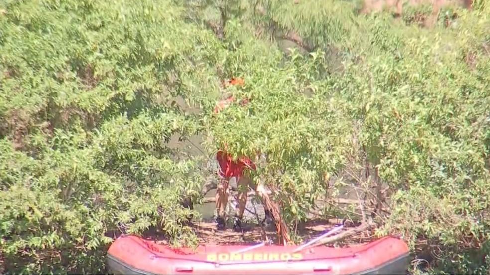 Bombeiro procura por gato em Represa de Rio Preto — Foto: Reprodução/TV TEM