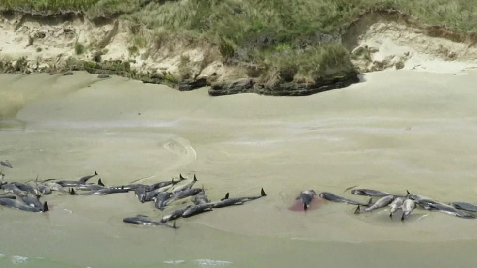 O Departamento de Conservação disse, em um comunicado, que não é incomum que baleias fiquem presas em praias da Nova Zelândia e que há cerca de 85 incidentes por ano — Foto: Departamento de Conservação da Nova Zelândia/BBC