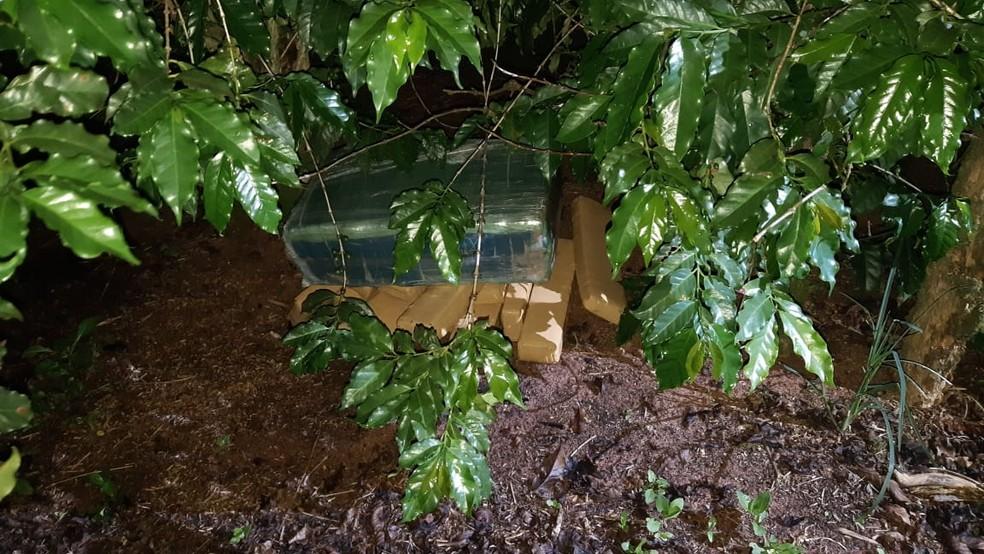 Entorpecentes foram encontrados em meio à plantação de café em Ocauçu — Foto: Polícia Rodoviária Federal/Divulgação