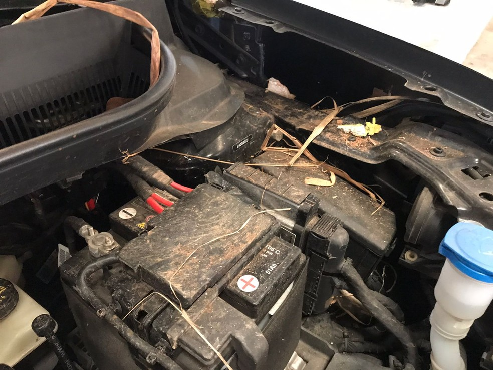 Filhotes de gambá estavam escondidos no motor do carro — Foto: Arquivo pessoal