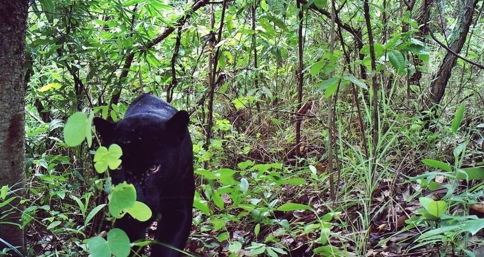 No Centro-Oeste do Brasil, os repórteres do Terra da Gente vão atrás da onça-preta (Foto: Brasilia é o Bicho )