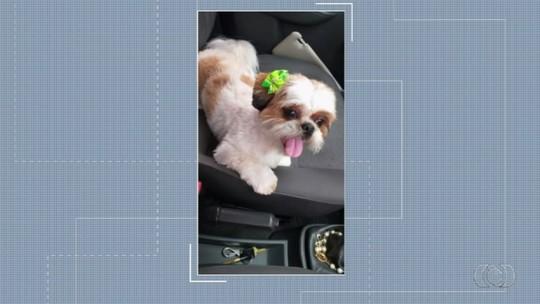 Telespectadora pede ajuda para encontrar cadela desaparecida
