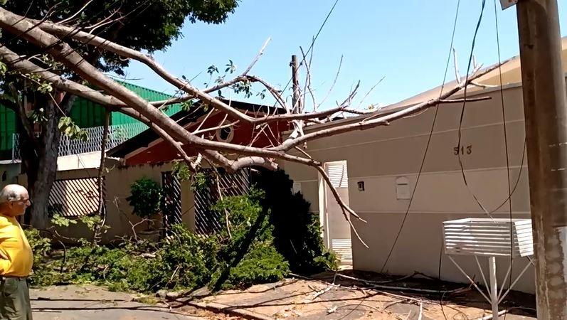 Árvore cai e galhos atingem fios e muro de casa no Taquaral, em Campinas