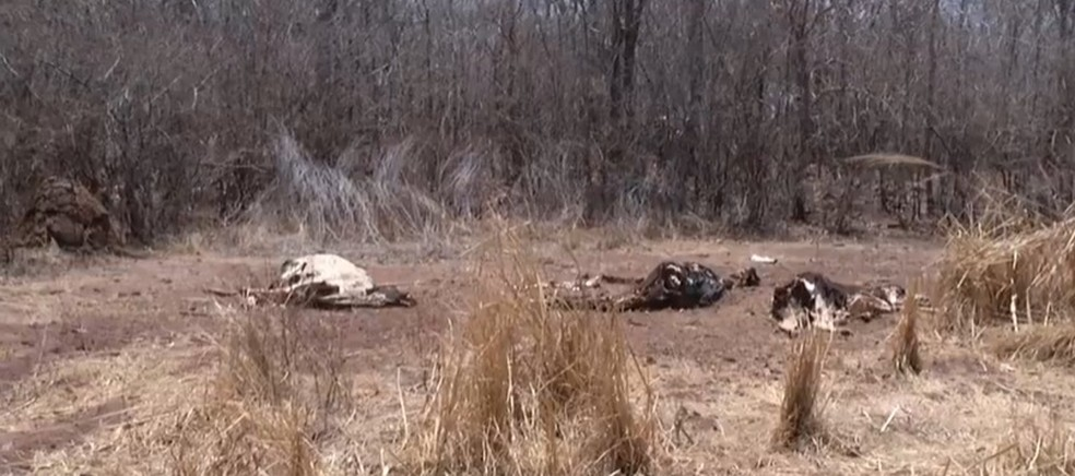 Animais mortos em São Francisco — Foto: Reprodução / Inter TV