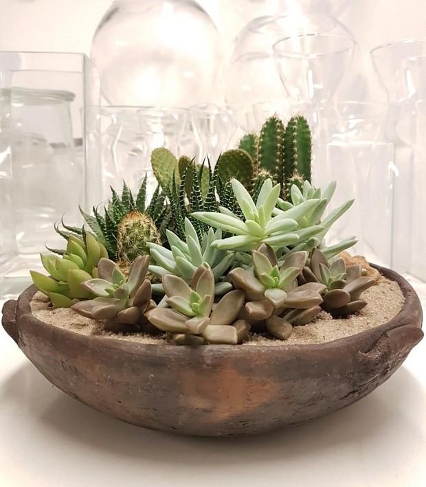 Mini cactos: como cuidar das suas plantinhas (Foto: Divulgação)