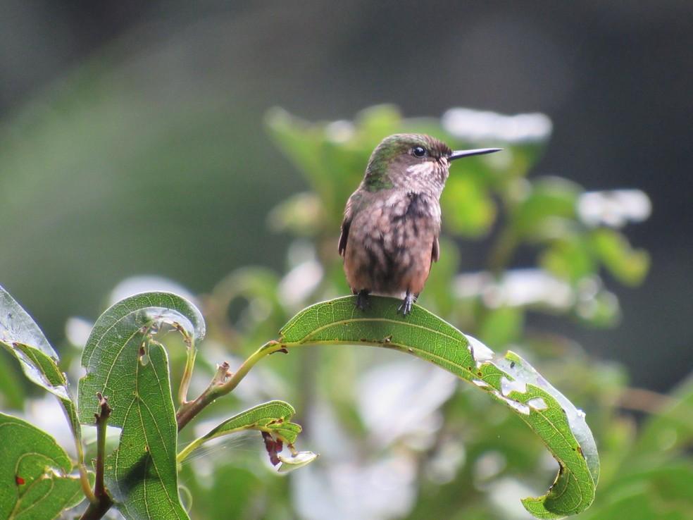Mais de 100 espécies de aves já foram clicadas por Davi — Foto: Davi Perez/VC no TG