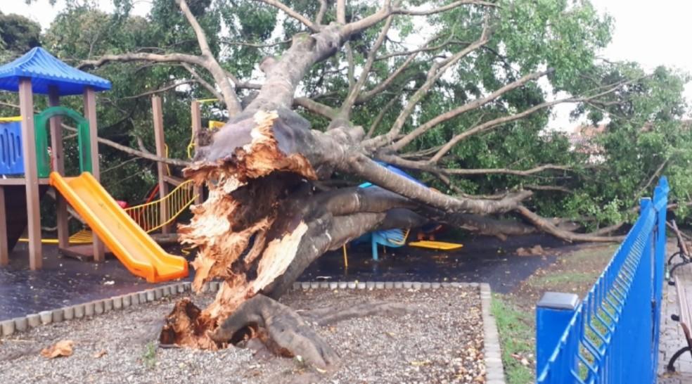 Chuva derruba árvores em bairros e praça de Pouso Alegre (MG) — Foto: Reprodução/EPTV