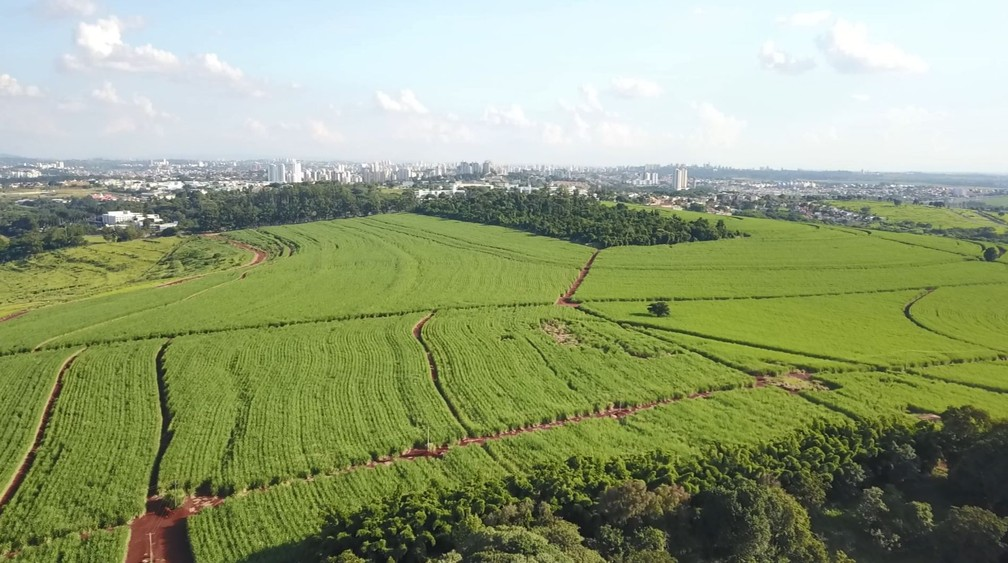 Imagens da área que irá abrigar o 'campus inteligente', em Campinas — Foto: Carlos A. Coutinho