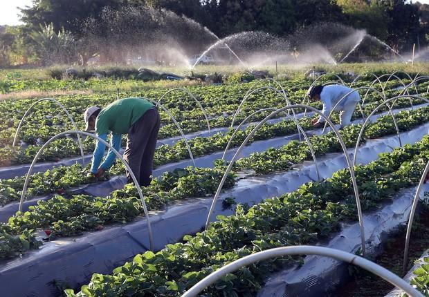campo, agricultura, agronegócio (Foto: Valter Campanato/Agência Brasil)