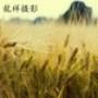 Papel de Parede: Yellow Grain