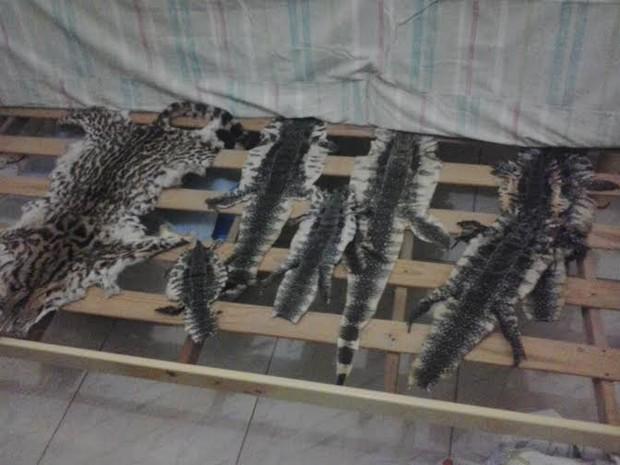 Pele de vários animais estavam embaixo do colchão. (Fot Assessoria/BPA)