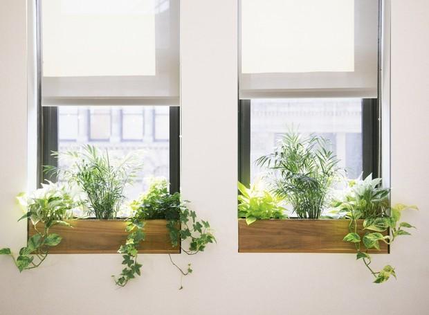 Ter vasos na janela é uma opção para quem tem pouco espaço em casa (Foto: Reprodução/Pinterest)