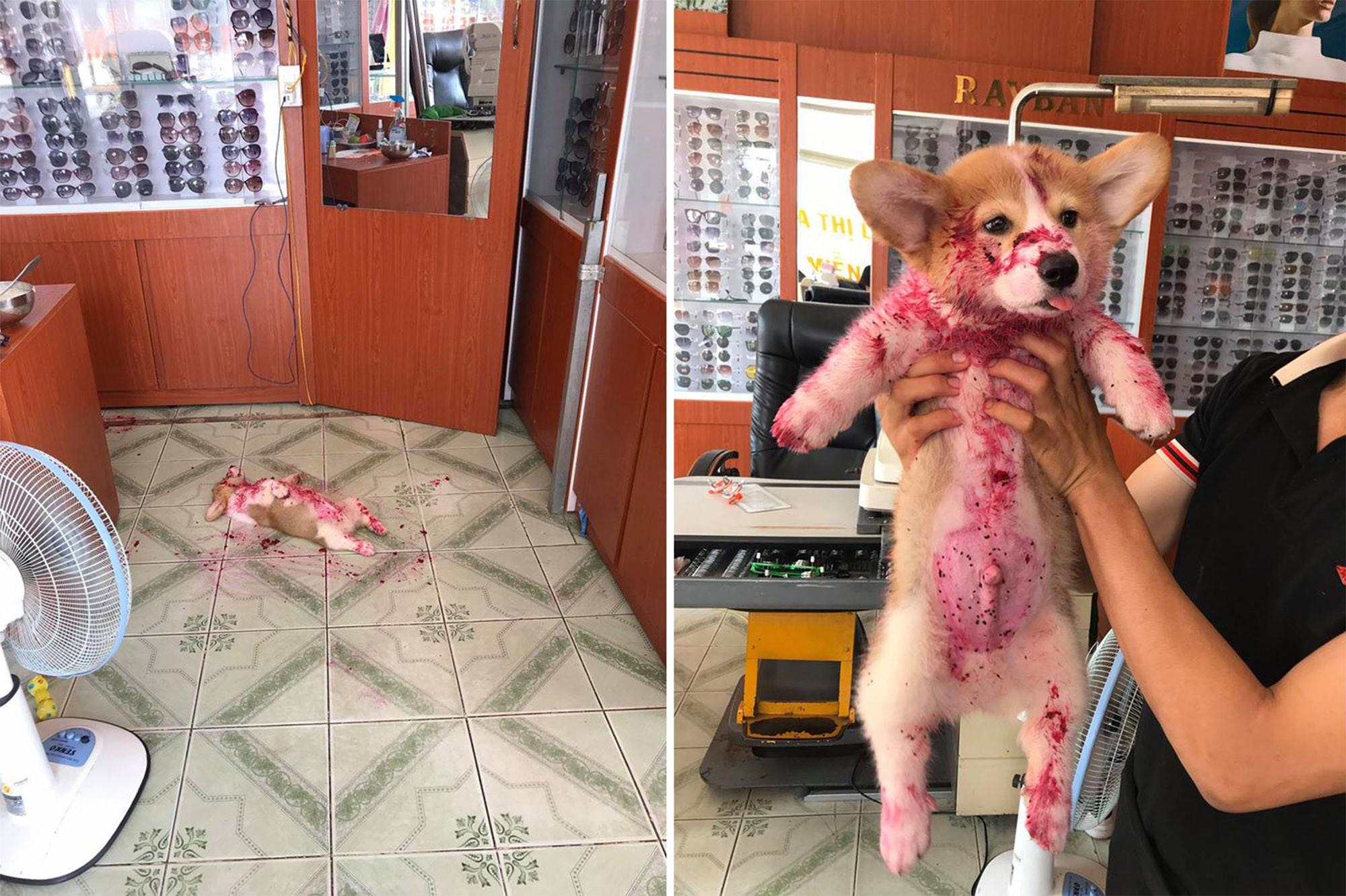 Cachorrinho dá susto em donos e viraliza na web