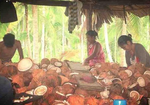 A CocoPallet deve comprar as matérias-primas de comunidades locais, movimentando a economia. (Foto: Divulgação)