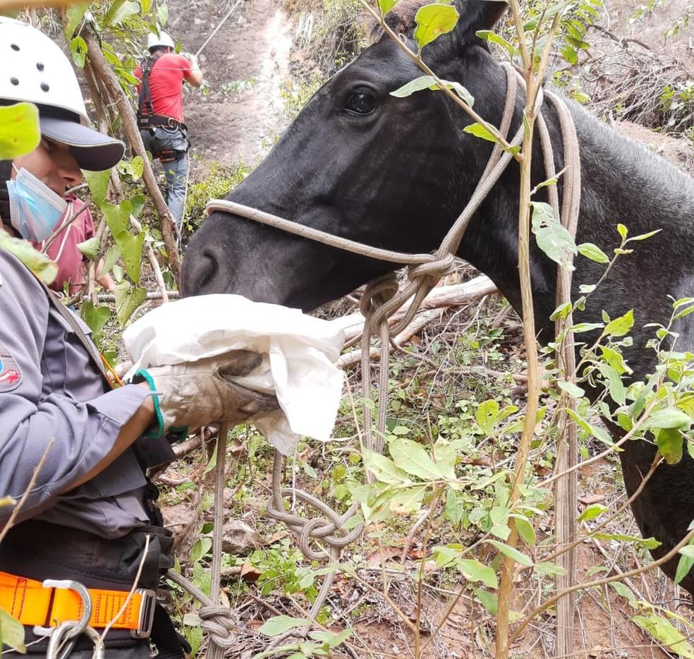 Bombeiros precisaram acalmar o cavalo que ficou estressado durante os trabalhos de resgate — Foto: Corpo de Bombeiros/Divulgação