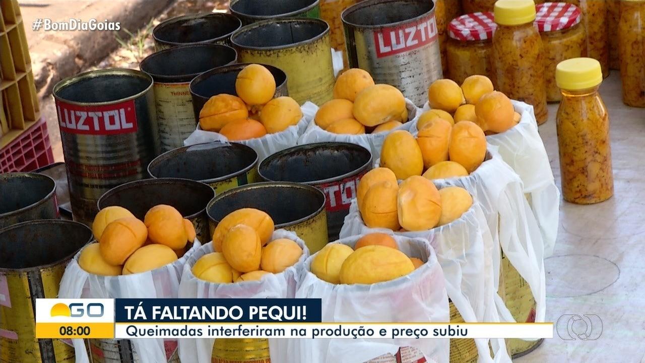 Queimdas podem prejudicar safra de pequi em Goiás