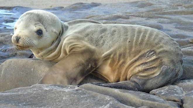 'The Blob': a preocupante massa de água quente que vem aparecendo na costa da California - Notícias - Plantão Diário