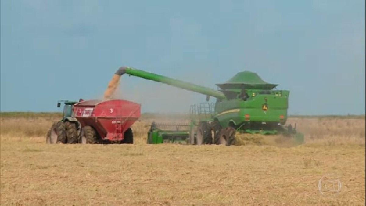 Principal produtor de arroz do Brasil, Rio Grande do Sul, já colheu 70% da área plantada