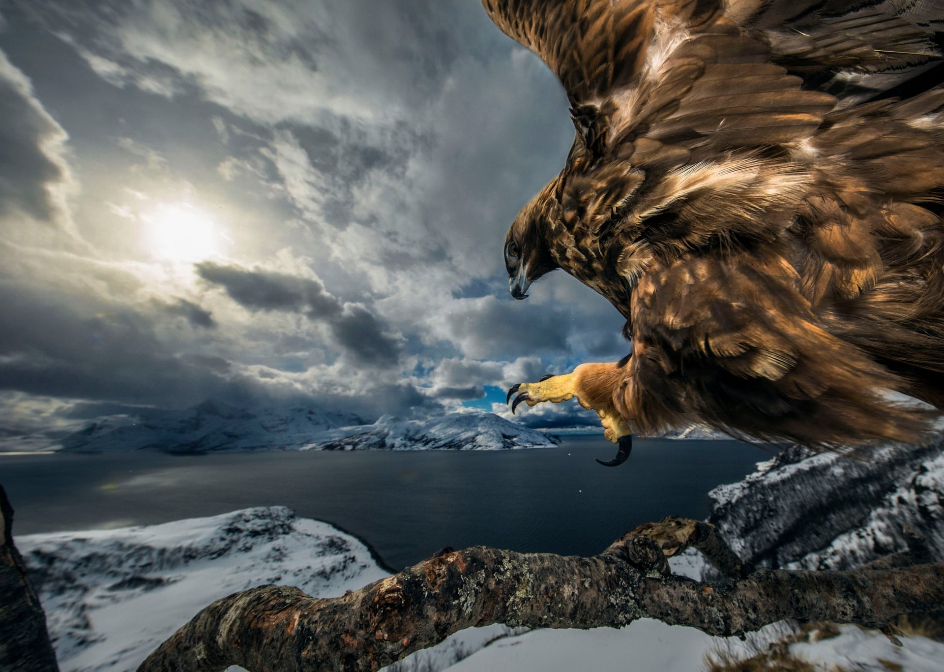 Land of the Eagle (Foto: Audun Rikardsen/2019 Wildlife Photographer of the Year)