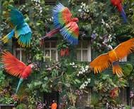 Fachada de prédio exalta floresta amazônica e alerta sobre desmatamento