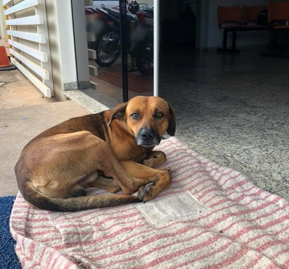Cão espera pelo dono há quatro meses na porta do hospital de Novo Horizonte (Foto: Cristine Sardella/Arquivo Pessoal)
