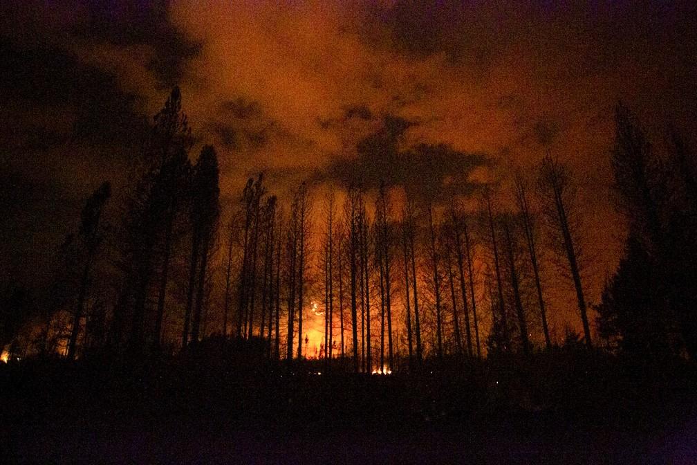 Chamas atingem floresta na Patagônia argentina — Foto: Matias Garay/AP Photo