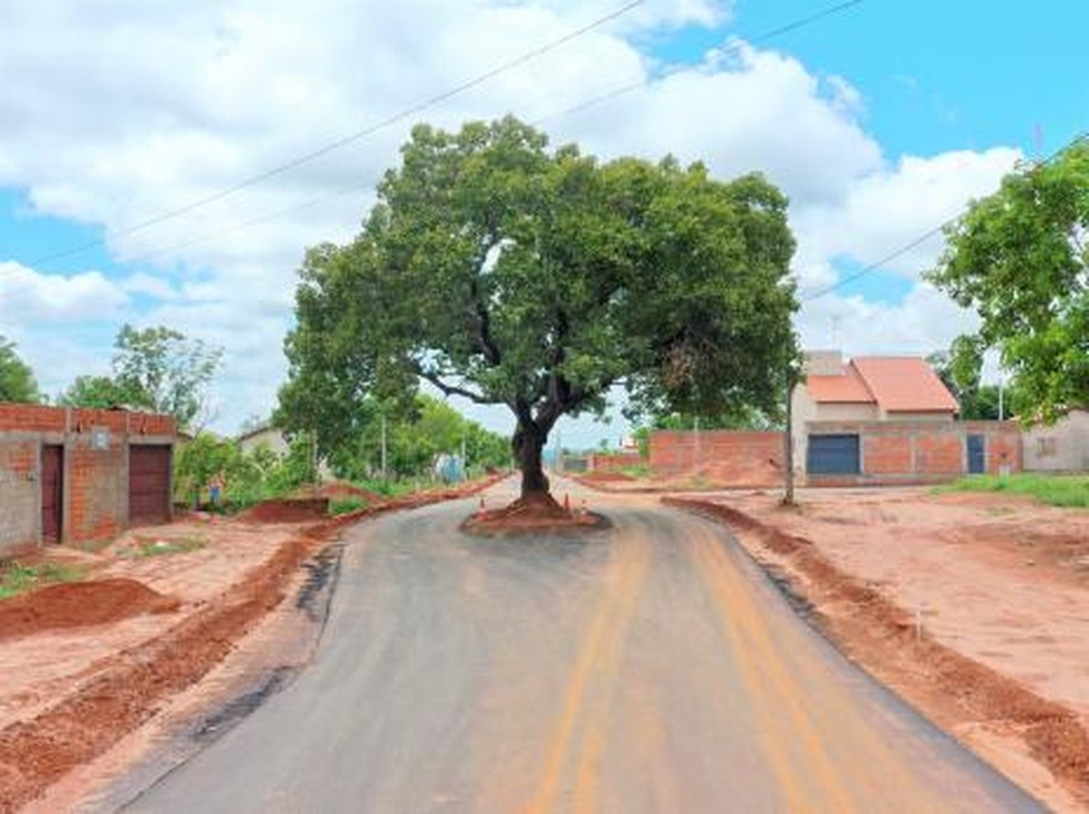 Prefeitura faz asfalto no Tocantins e deixa pé de pequi no meio de rua